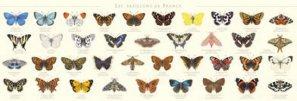 Papillons de France - gulf stream  - 2225193928513