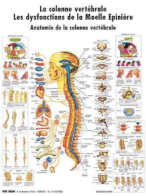 Planche de la colonne vertébrale - phu-xuan - 2224489816589 -