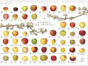 Pommes de France - gulf stream  - 2225186147495