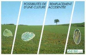 Possibilités de remplacement d'une culture accidentée - acta - 9782857941279 -