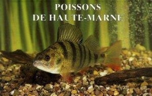 Poissons de Haute-Marne - dominique guéniot - 9782878251319 -