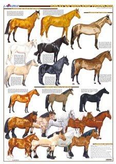 Races de berceau français - lavauzelle - 9782702515440 -