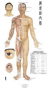 Set de 7 planches anatomiques plastifiées murales en couleurs - phu-xuan - 2224489799318 -